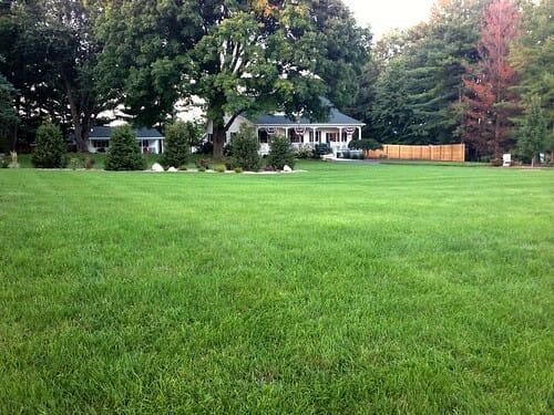 gorgeous green grass