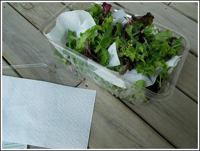 Image result for storing lettuce