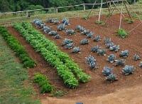 veggie garden thumb