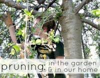 pruning thumb