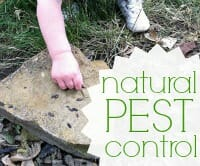 pest control thumb
