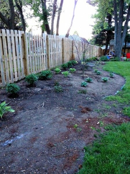 plants along fence