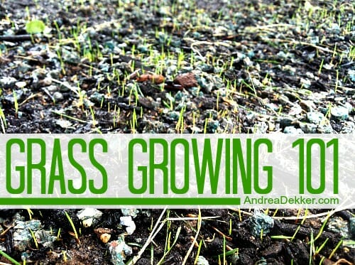 grass growing 101