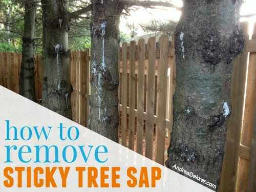 how to remove sticky tree sap from skin hair clothes and toys andrea dekker. Black Bedroom Furniture Sets. Home Design Ideas