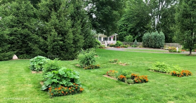 a simple front yard vegetable garden