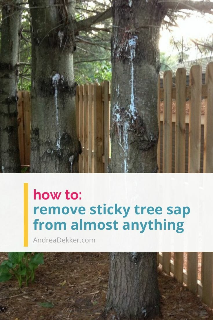 Check out this SUPER SIMPLE tip to remove sticky tree sap from almost anything? via @andreadekker