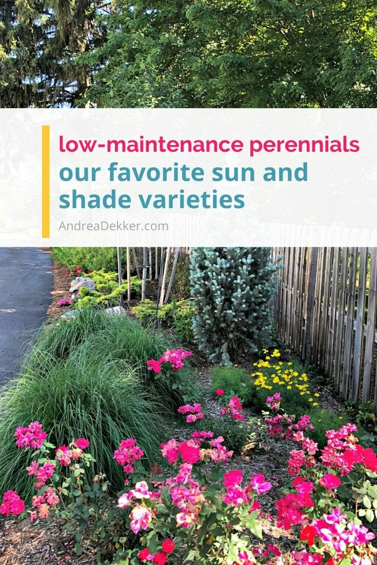 Low-maintenance perennials are a busy gardener's best friend! If you love the LOOK of beautiful flowers without all the maintenance, try planting a few of these low-maintenance perennials in your yard this year! via @andreadekker